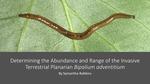 Determining the Abundance and Range of the Invasive Terrestrial Planarian Bipalium adventitium by Samantha Robbins
